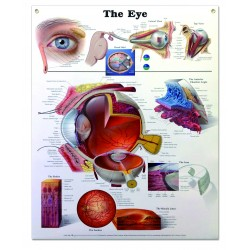 "Poster plastifié ""the eye"""